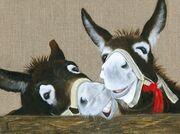 Donkeys - Laughing
