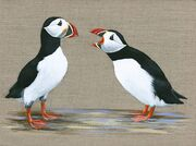 Puffins - The Telling Off