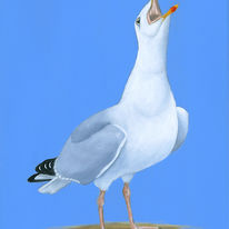 Sea Gull Oggy Oggy