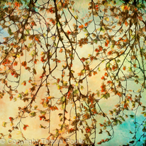 Tapestry of Leaves
