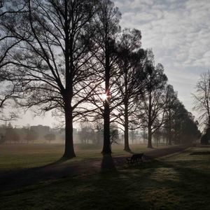 Preston Park Elms at dawn