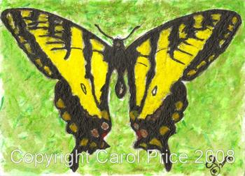 1 Western Tiger Swallowtail