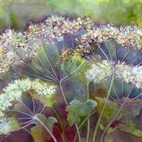 Cow Parsley by Penny hopkins