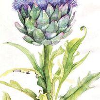 Artichoke Flower by Penny Hopkins