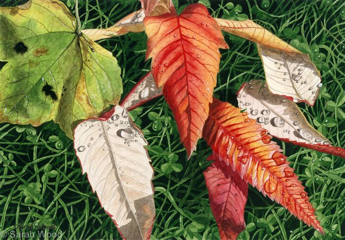 Sycamore and Rhus typhina leaves. Limited Edition