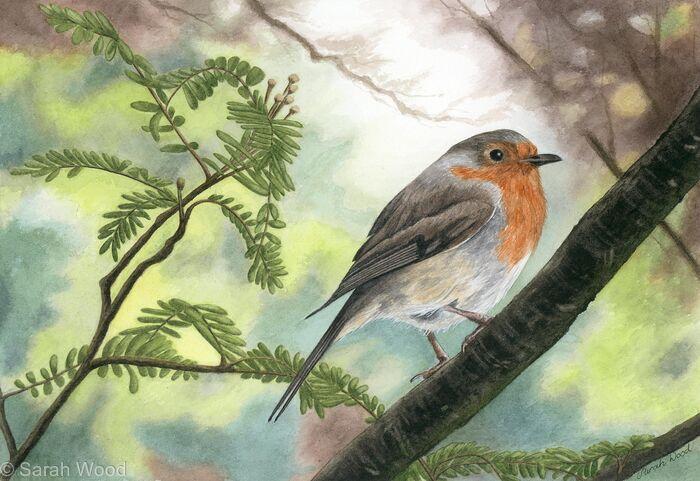 Bob Bob Bobbin, Original watercolour and gouache art work