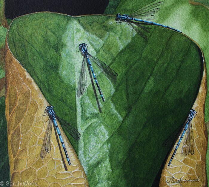 Damselfly Meeting, Original watercolour and gouache art work