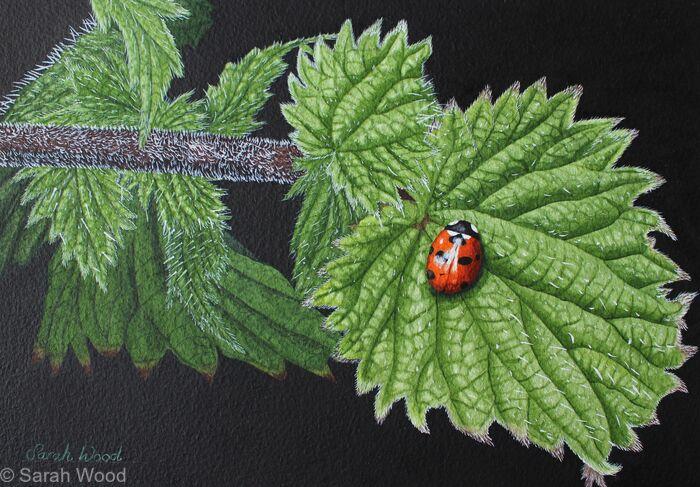 Seven Spot Ladybird, Original watercolour and gouache art work