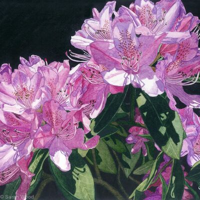 Rhododendrons. Giclee Print