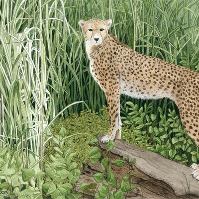 Spots and Stripes. Giclee Print