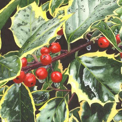 Holly, Ilex aquifolium, Original watercolour and gouache art work