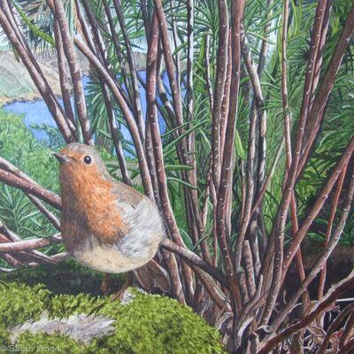 Robin at Overbecks, Original Watercolour and Gouache Art Work.