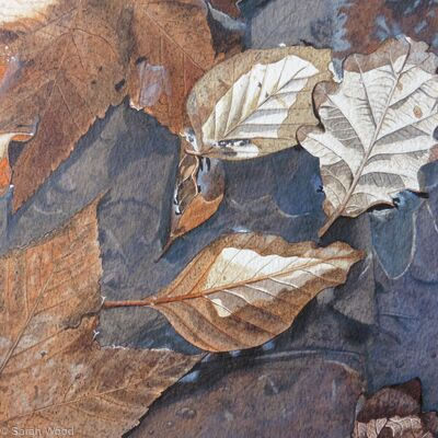 Floating leaves on a muddy puddle. Original watercolour and gouache Art Work
