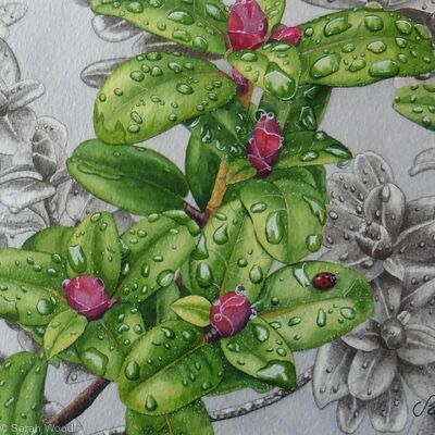 Rhododendron moupinense. Original watercolour, gouache and pencil Art Work.