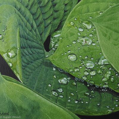 Hostas with raindrops. Watercolour and Gouache Original Art Work.
