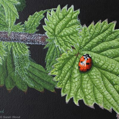 Seven Spot Ladybird, Original watercolour and gouache art work