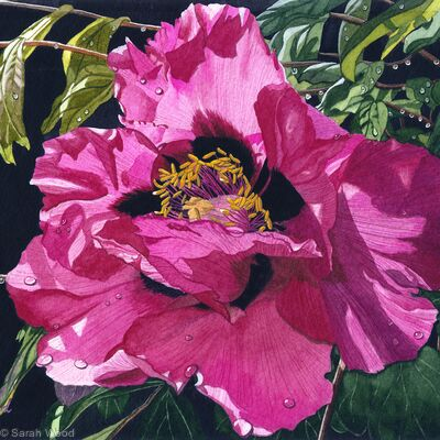 Paeonia, Watercolour & gouache Original Art Work