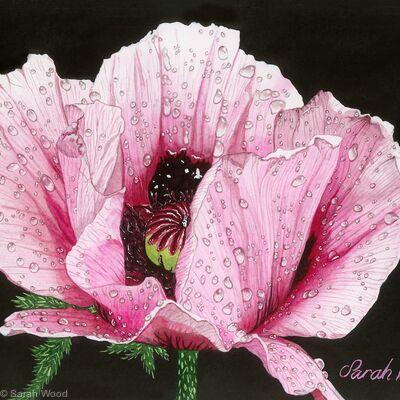 Poppy Papaver, Original watercolour and gouache art work