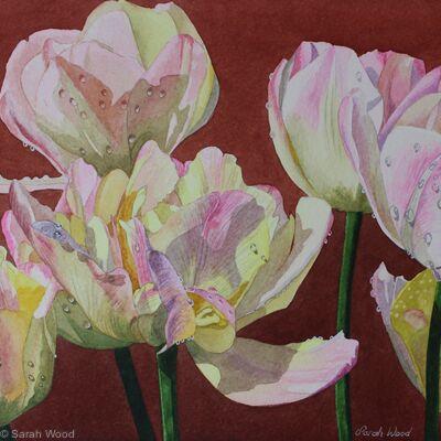 Tulipa Peaches and Cream, Original watercolour and gouache art work.