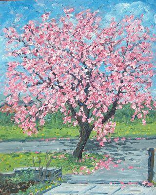 blossom tree, standish...