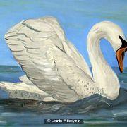 Swan's Femininity