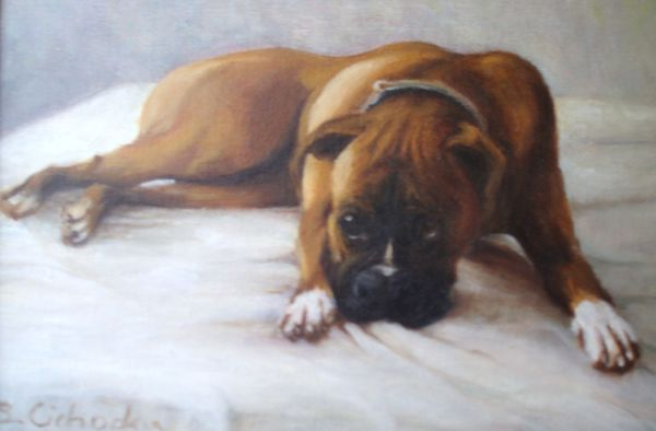 Boxer called Mr.
