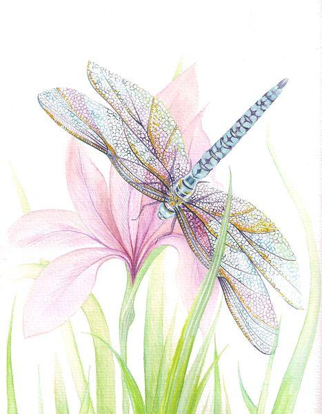 Sheer Wings (4)