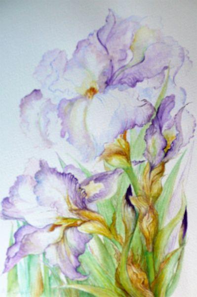 Iris Delight