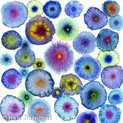 Blooms 7 Blue