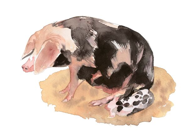 Bayeux Sow and Piglet