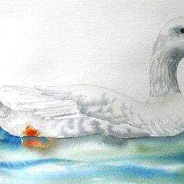 Czech goose on water