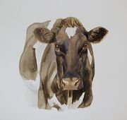 Friesian cow