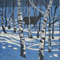 Stag in Birch trees