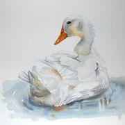 Pekin duck