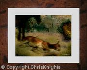 Tranquil Pony (Framed)