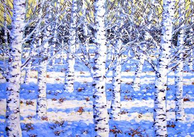 Winter Birches 22nd/23rd/24th November