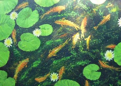 Goldfish and Waterlilies  11th/12th/13th October