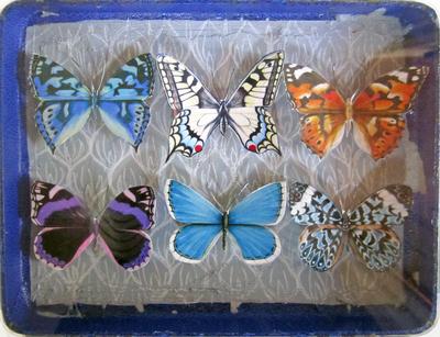 Mauris Papiliones X6 #5