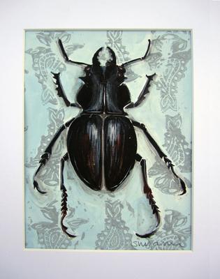 Shiny Black Bug