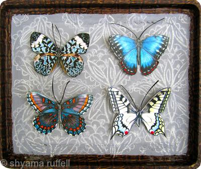 Mauris Papiliones X4 #2