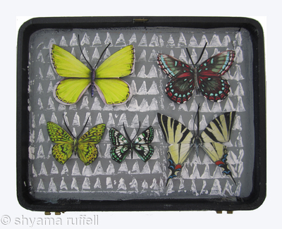 Mauris Papiliones x5 #36