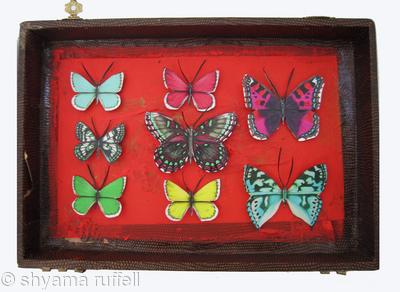 Mauris Papiliones x8 #20