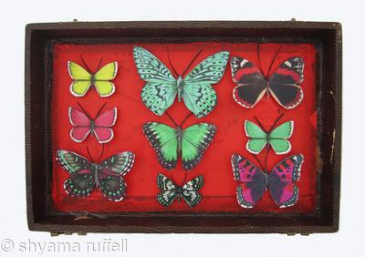 Mauris Papiliones x9 #31