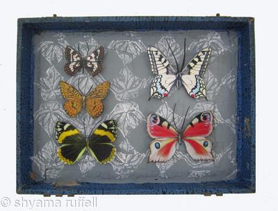 Mauris Papiliones x5 #33