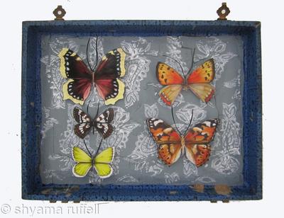 Mauris Papiliones x5 #37
