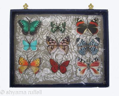 Mauris Papiliones x9 #45