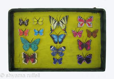 Mauris Papiliones x15 #47