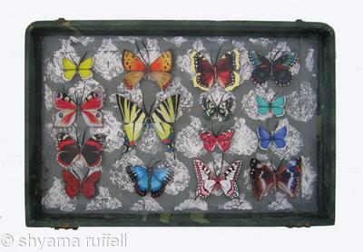 Mauris Papiliones x15 #41