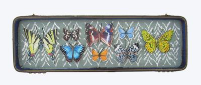 mauris Papiliones x8 #43