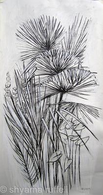 Fan Palm Study